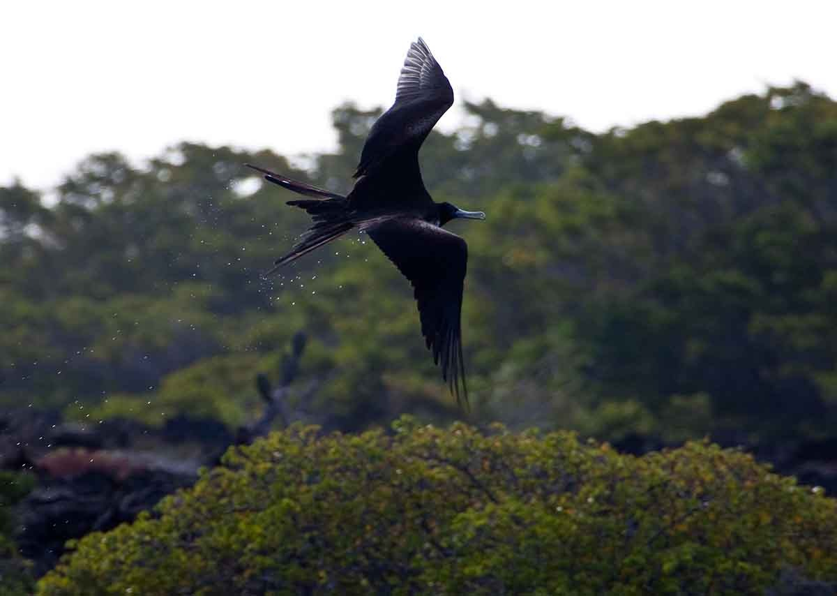 Adventure & Wildlife in the Western Galapagos Islands
