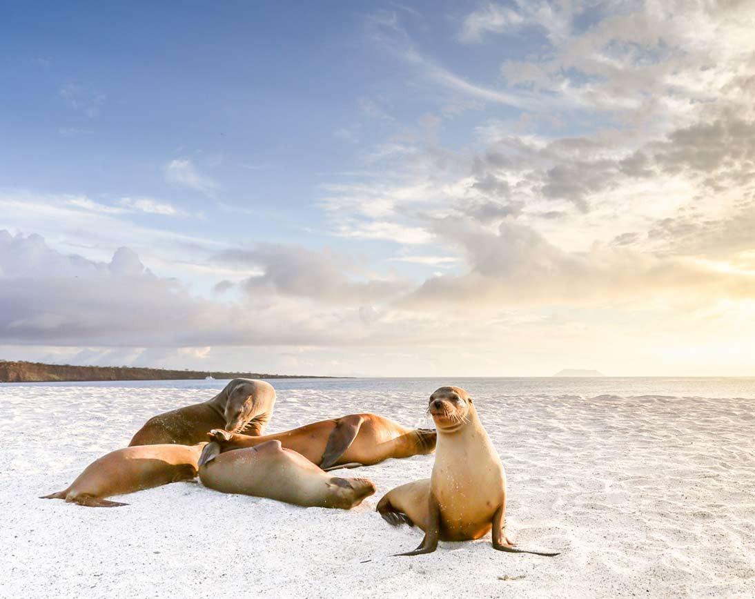 Mosquera Island | Galapagos
