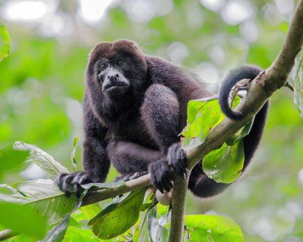 Photography Tour in the Amazon Rainforest of Ecuador
