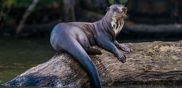 Premium Amazon Tour at Napo Wildlife Center - Ecuador