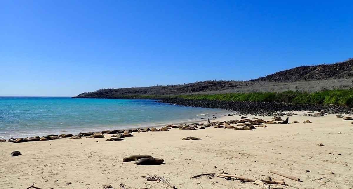 Santa Fe Island | Galapagos | South America Travel