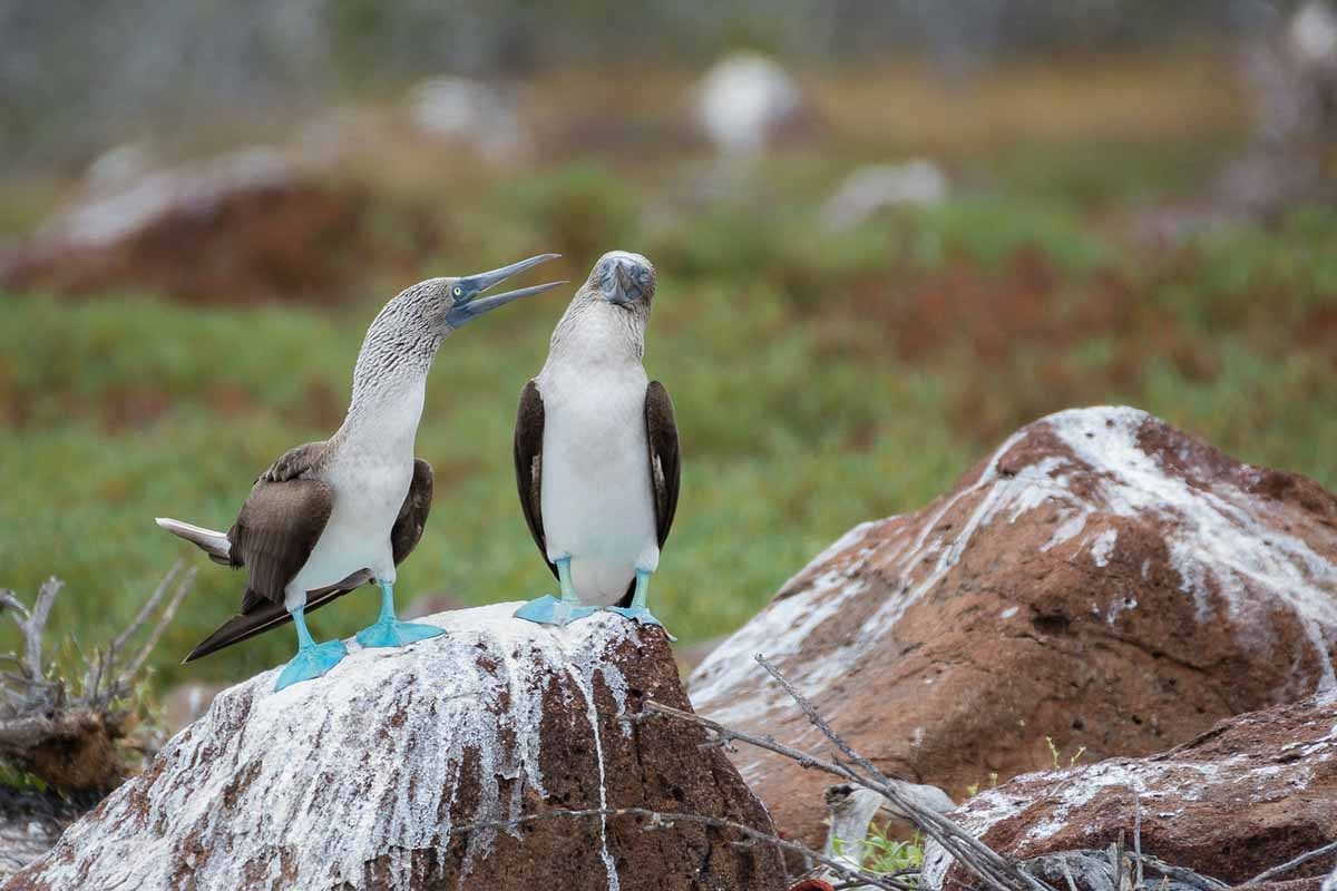 Birds | North Seymour