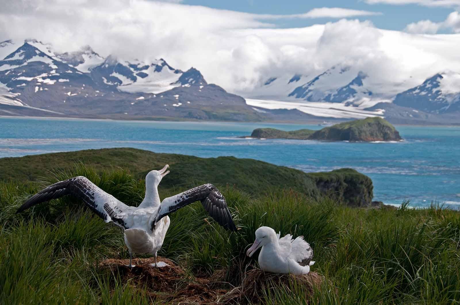 South Georgia | Antarctica