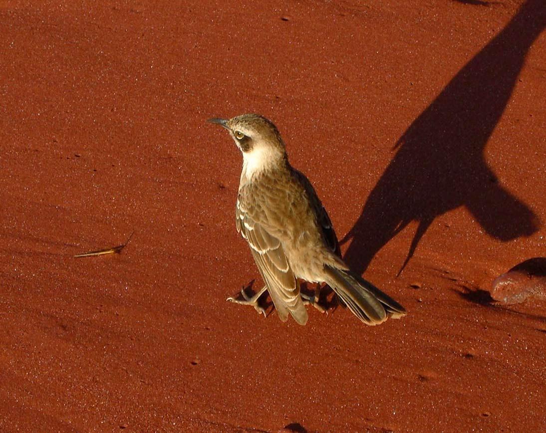 Rabida Island | Galapagos | Birds