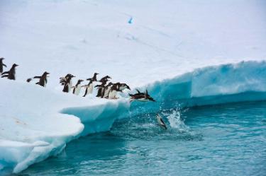 Colony of Penguins | Antarctica