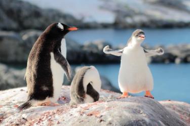 Antarctica penguins | South America Travel