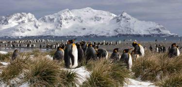 Penguis | Antarctica | South America Travel