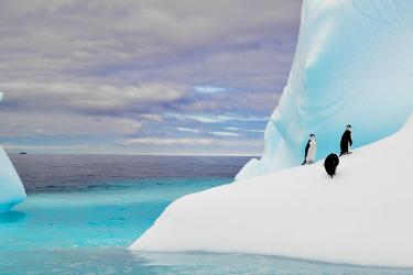 Iceberg | Antarctica | South America Travel