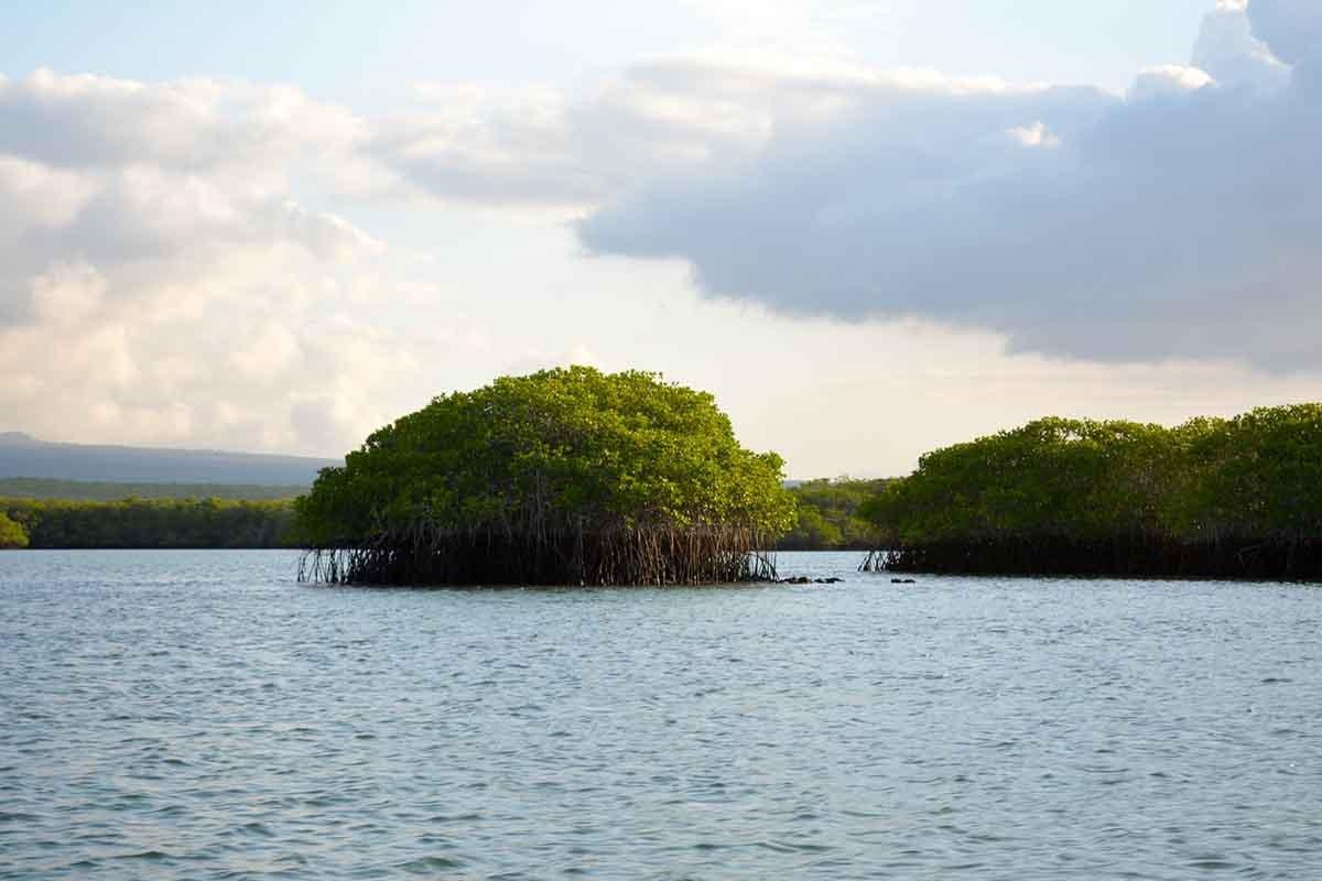 Black Turtle Cove | Galapagos