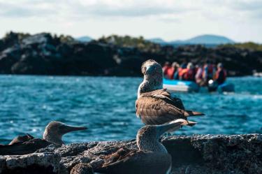 Blue Foot Boodies   Galapagos