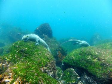 Fernandina Island | Galapagos - Islas Galápagos