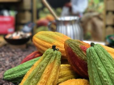 Cacao | Peru