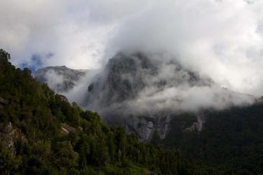 Alerces    Patagonia