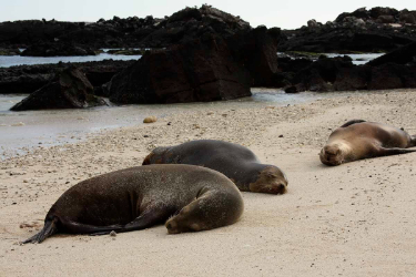Darwin Bay | Galapagos