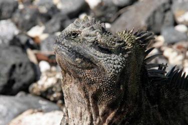 Darwin Bay | Galapagos - Islas Galápagos