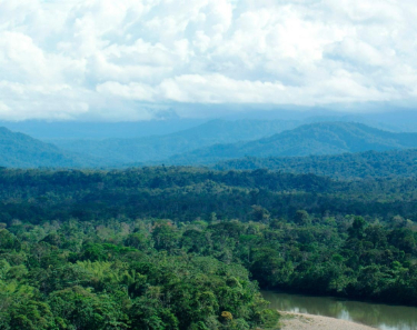 Deep Rainforest Experience Tour