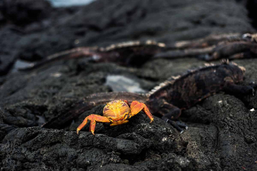 Egas Port | Galapagos
