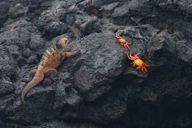 Egas Port | Galapagos Islands - Islas Galápagos