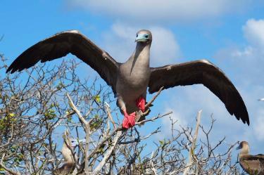 Genovesa Island | Galapagos - Islas Galápagos
