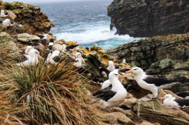 Albatross and Penguin | Antarctica | South America Travel