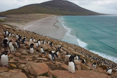 Penguins | Antarctica | South America Travel