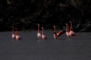 Flamingos Lagoon | Galapagos islands - Islas Galápagos