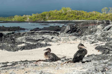 Cormorant Point | Galapagos Islands | South America Travel