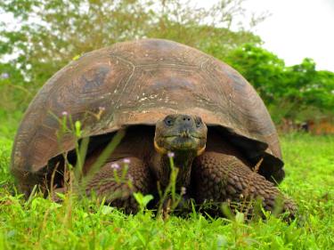 Fausto Llerena Breeding Center | Galapagos Islands - Islas Galápagos