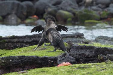 Cormorant Point | Galapagos - Islas Galápagos
