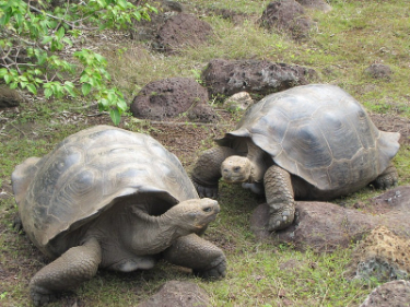 Enchanted Luxury South to North Galapagos Islands Cruise