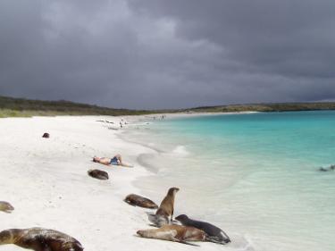 Gardner Bay | Galapagos Islands - Islas Galápagos