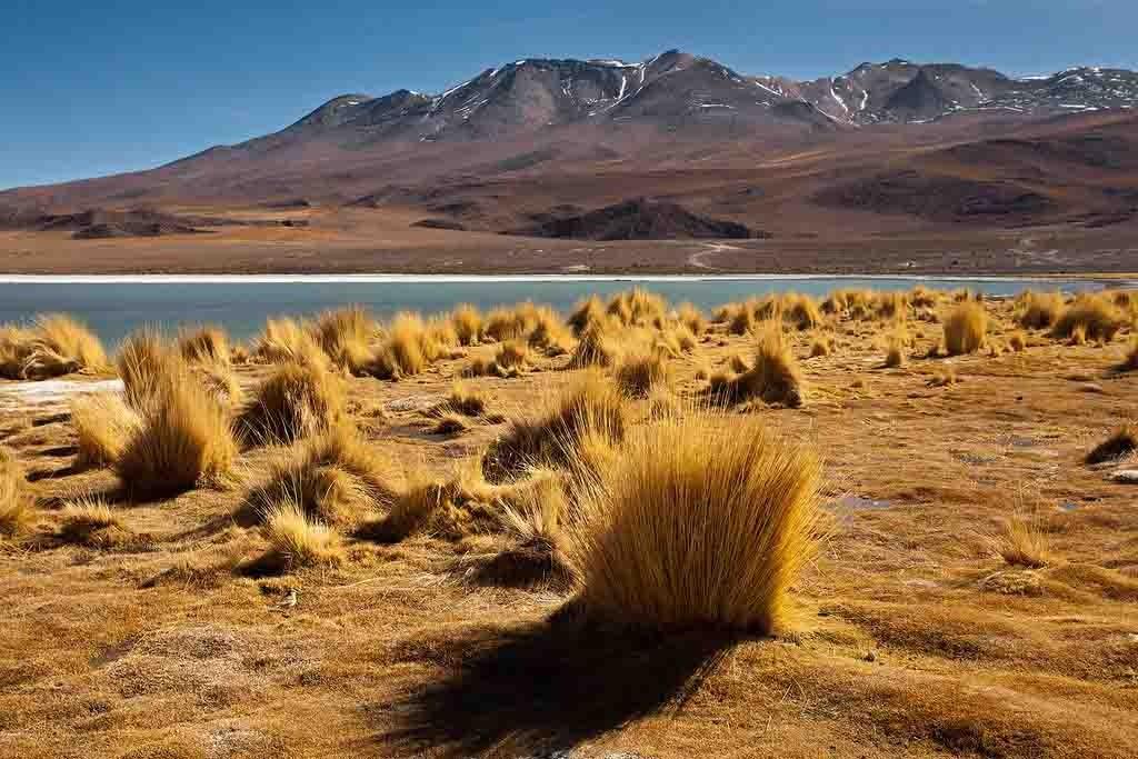 Hedionda lagoon   Bolivia