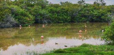 Los Humedales | Galapagos Islands - Islas Galápagos