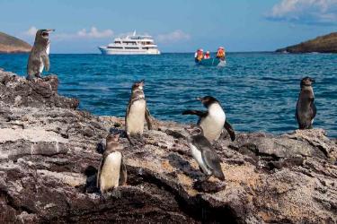 Penguins | Isabela