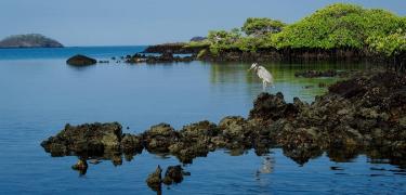 Isabela Island | Galapagos - Islas Galápagos