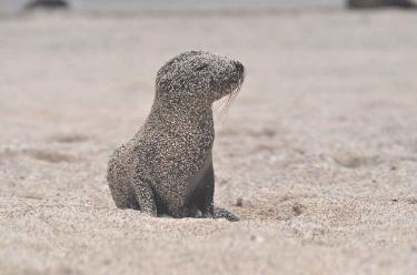 Lobos Island | Galapagos - Islas Galápagos