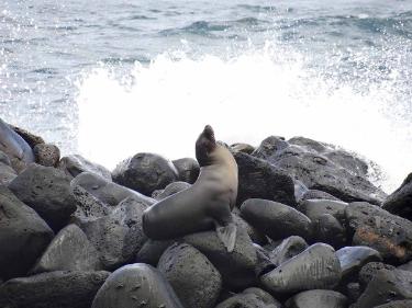 La Loberia   Galapagos Islands