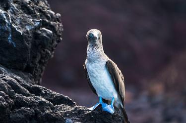 Cruise the Southern waters of the Galapagos | Yolita Yacht - ll - Itinerary B
