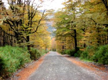 Parque Nacional Puyehue