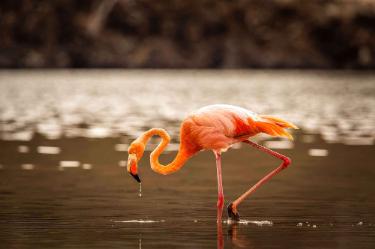 Rabida Island | Galapagos | Flamingos