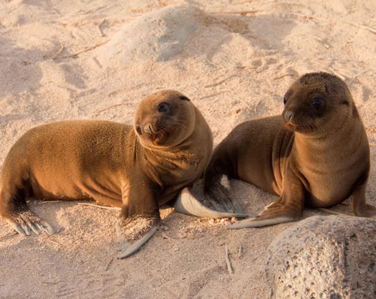 San Cristobal Islands | Galapagos | Sea Lions