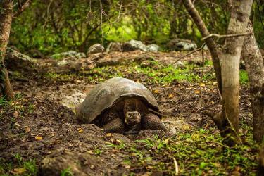 Floreana | Galapagos tours