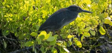 Santa Fe Island | Galapagos - Islas Galápagos