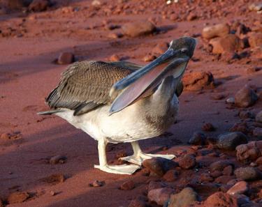 Rabida | Galapagos