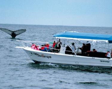 Whale watching | Ecuador