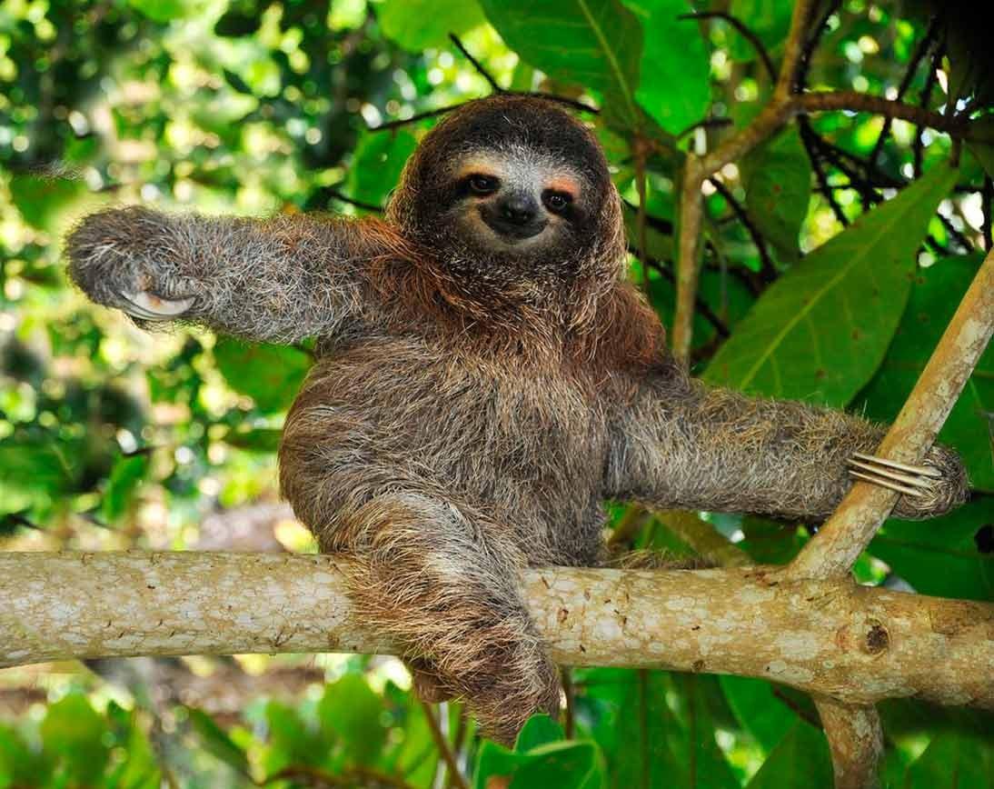 Sloths | Wildlife Tour | Ecuador