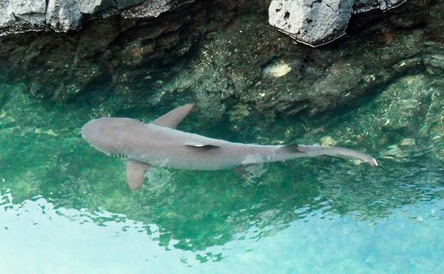 Isabela Island   Galapagos   South America Travel