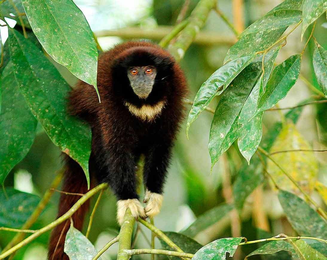 Monkey | Wildlife Tour | Ecuador