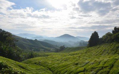 Traveldiary Maleisië #4: natuurpracht