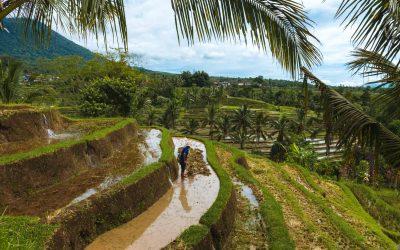 Backpacken op Bali   Hoe is reizen in Bali?